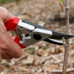 Pruning 101: </br>The Pruning Basics from A to Z