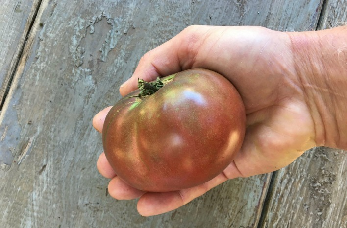 Best time to pick a tomato like this Cherokee Purple