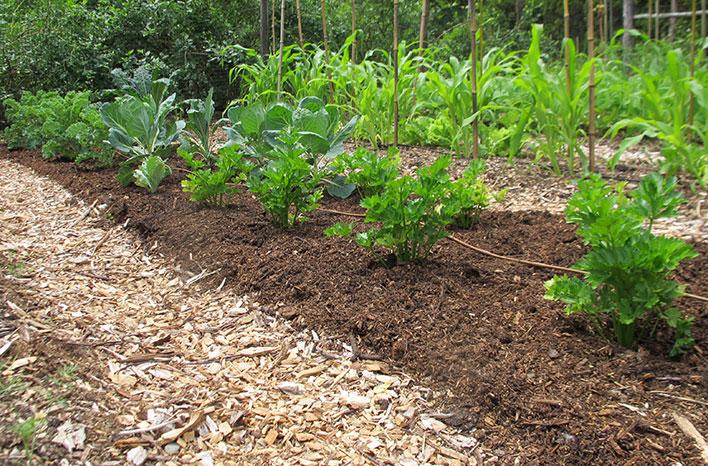Mounded soil
