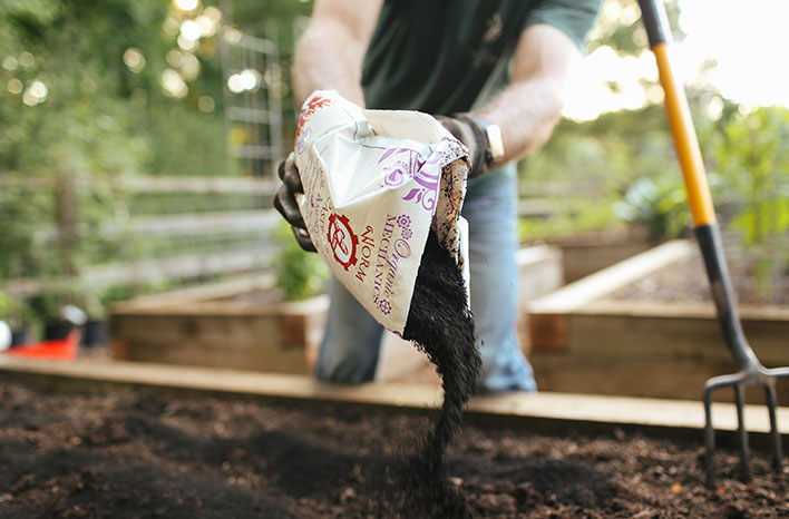 Worm castings organic compost