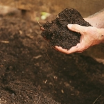 How to Improve Your Soil: 3 Simple Steps for Making Any Soil Better
