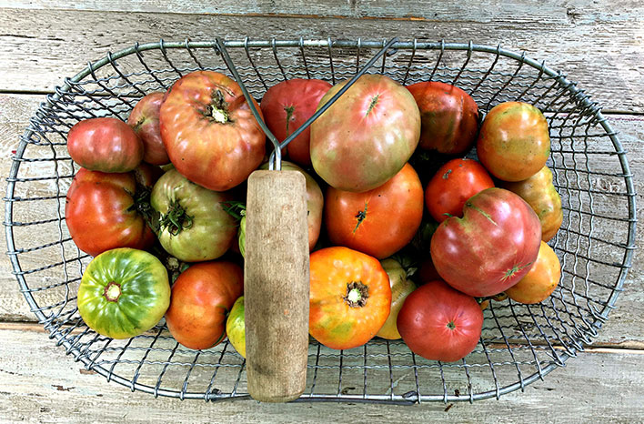 How to grow epic tomatoes