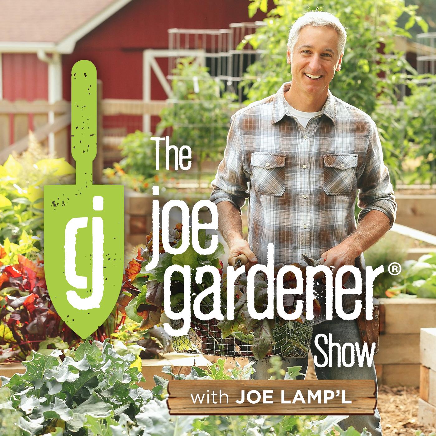 The joe gardener Show - Organic Gardening - Vegetable Gardening - Expert Garden Advice From Joe Lamp'l