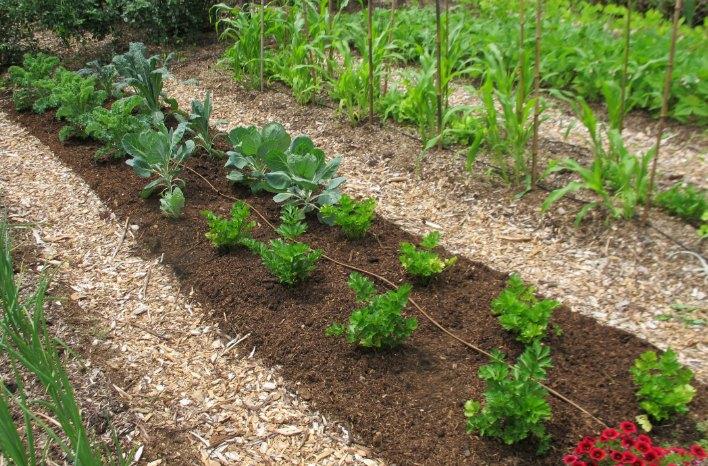 Weedless Gardening with Lee Reich
