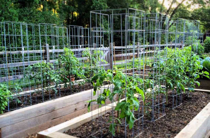 how to make a tomato cage