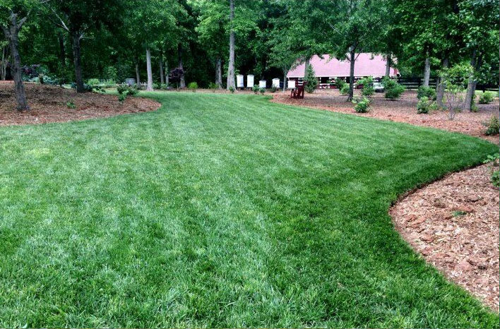 organic weedless lawn
