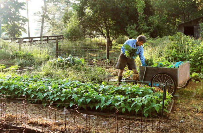 no-till gardening for better soil