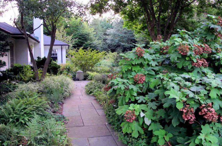 working with native plants in your garden