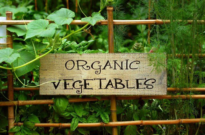 how to save money in your organic garden