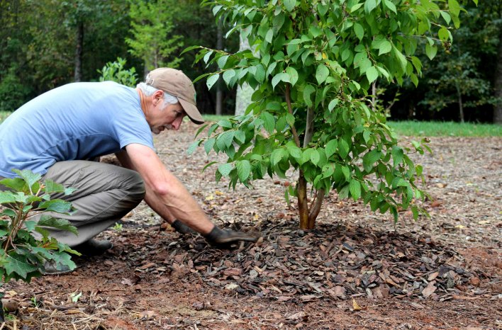 How to plant trees with Joe Lamp'l