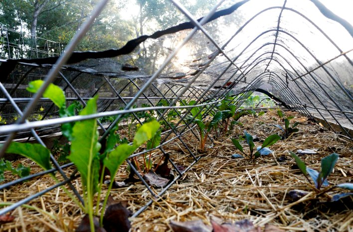 Shade cloth over seedlings