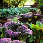 What to Plant in a Fall Vegetable Garden
