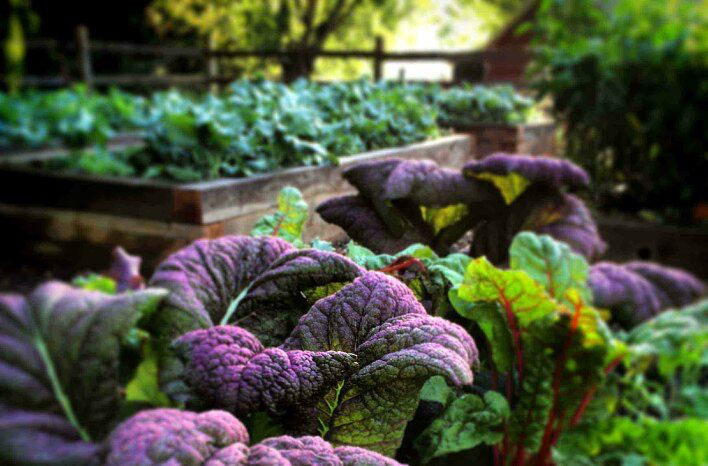 what to plant in a fall vegetable garden - Fall Garden Plant