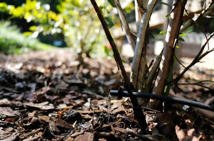 watering trees and shrubs
