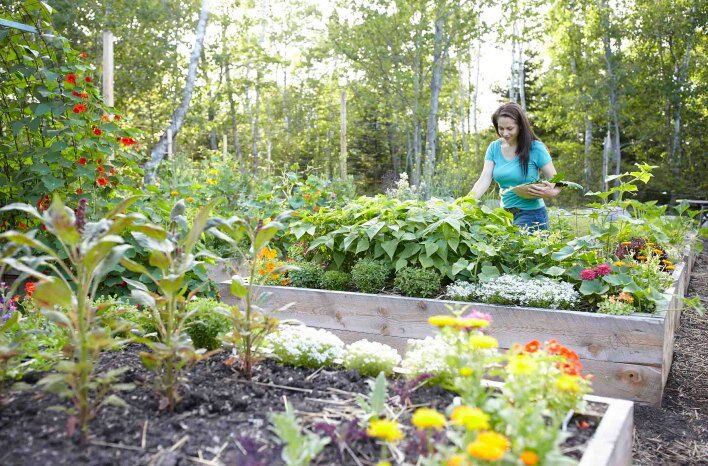 How To Grow Vegetables Year Round With Niki Jabbour The Joe Gardener Podcast
