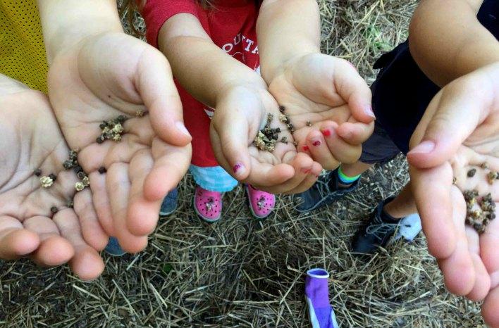children's hands holding seeds