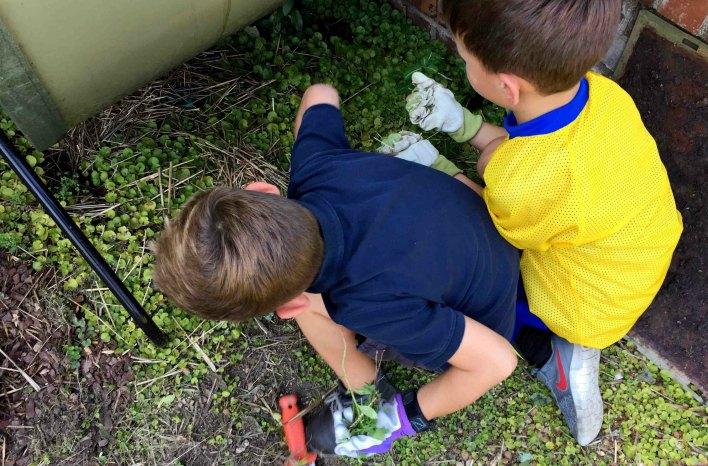 boys pulling weeds