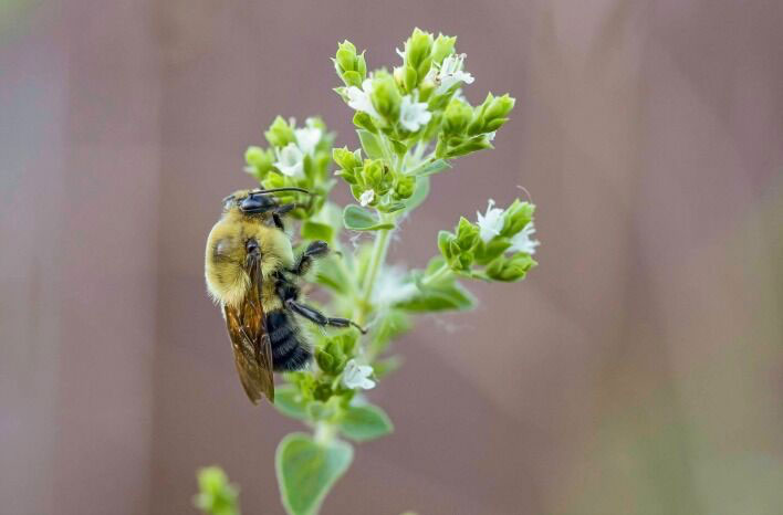There are many ways to attract pollinators like wild bees