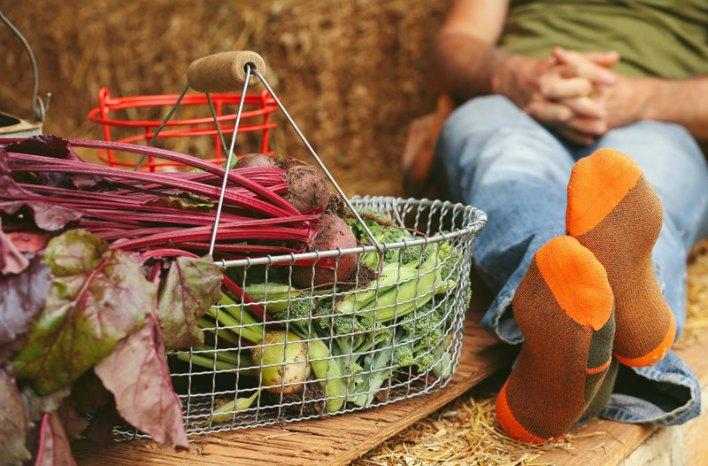 harvest basket and farm to feet socks