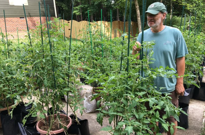 Craig LeHoullier starts all his tomato plants from seed