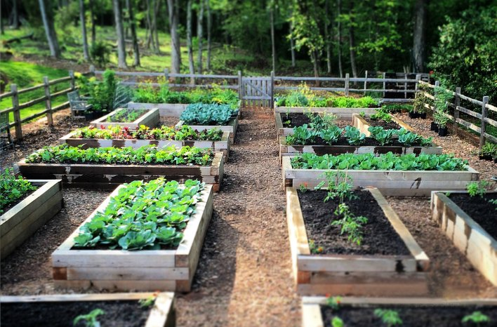 Crop Rotation in the home garden