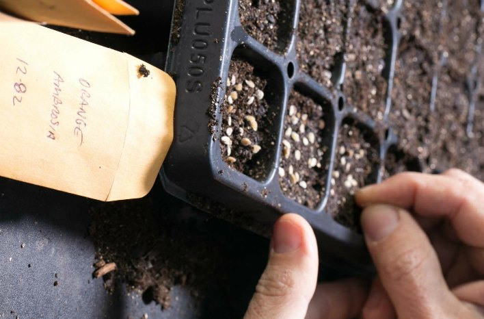 How To Start Seeds Indoors For Gardening Joe Gardener 174