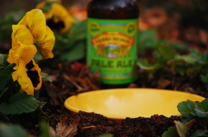 Beer traps for slugs
