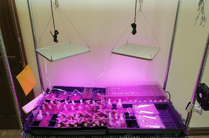 Red and Blue LED Grow Lights