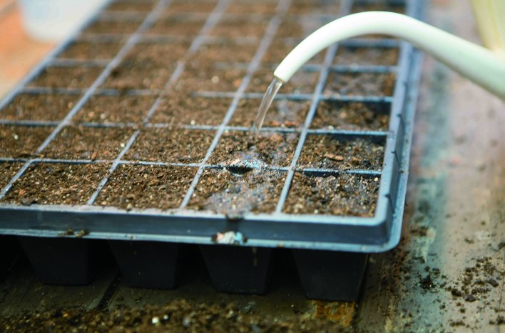 watering seed trays from overhead