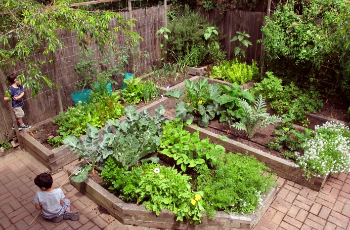 Urban raised bed garden