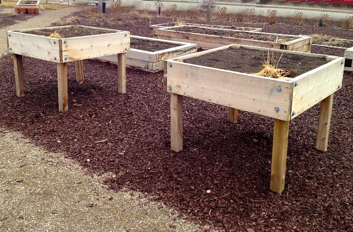 Wheelchair accessible garden beds.
