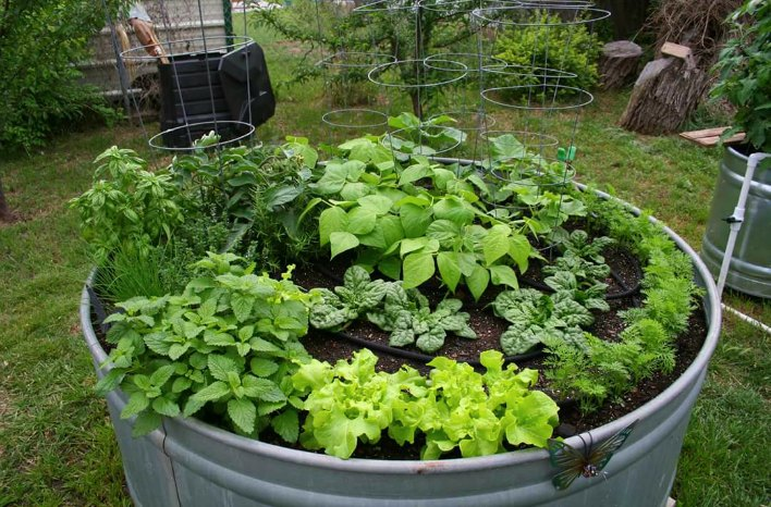 Galvanized tub raised bed garden