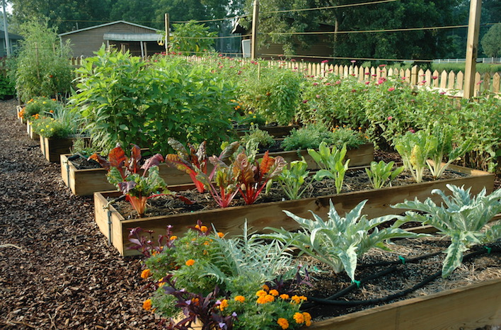 Wood raised bed garden structures
