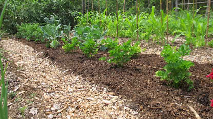 In-bed garden rows
