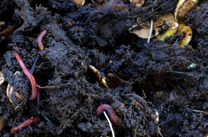 Worms in the soil