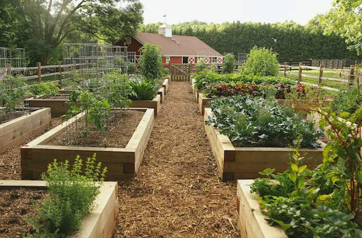 gardenfarm raised beds - Garden Bed