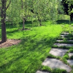 Organic Lawn Renovation for Spring: 5-Steps To Your Best Lawn Ever