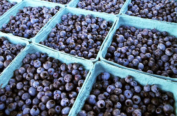 How To Grow Blueberries   Care and Maintenance  joe gardener®