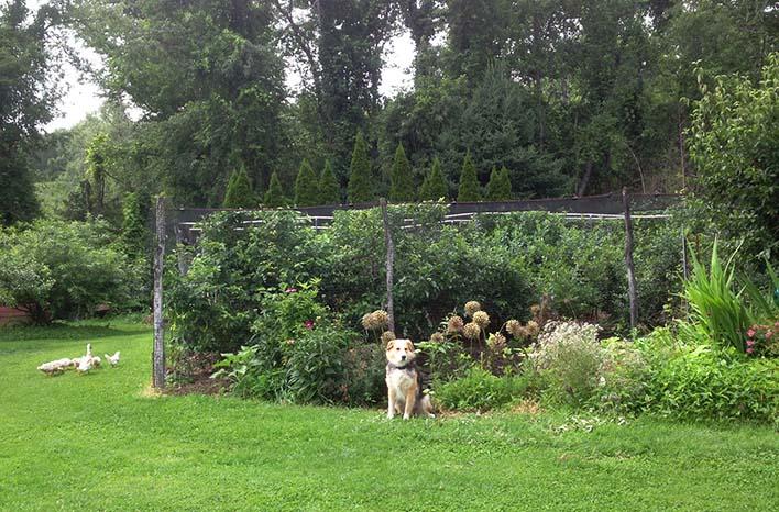 Dr. Lee Reich garden