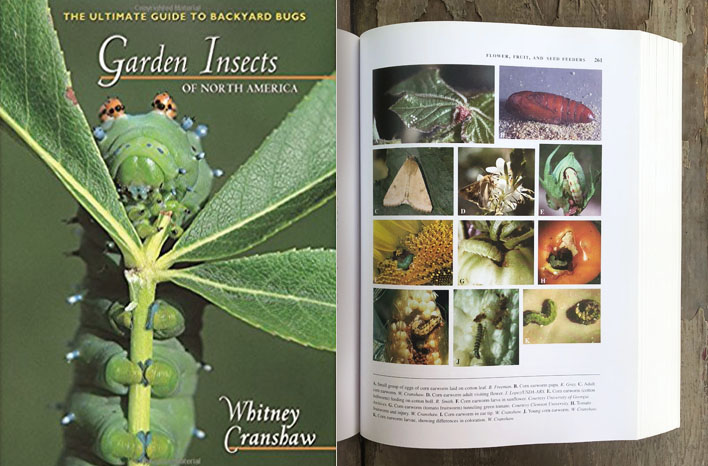 Garden Insects of North America book
