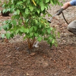 How to Water Your New & Established Plants: Pro Tips – Part 2 of 5