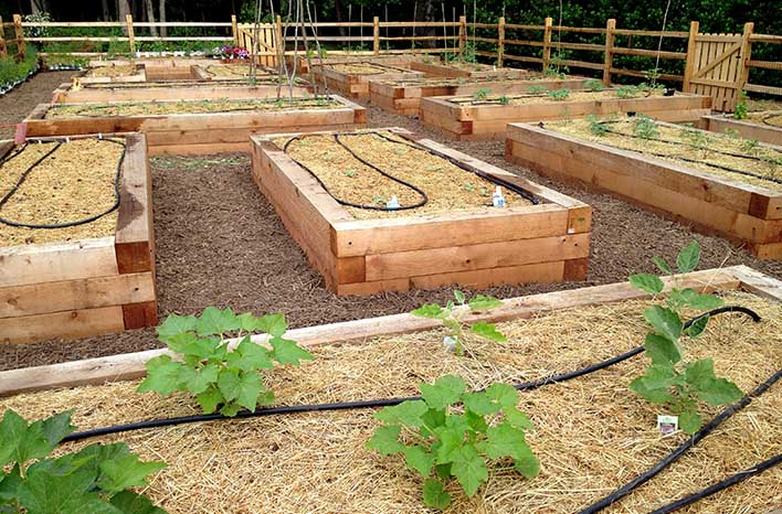 Soaker Hoses In Raised Beds