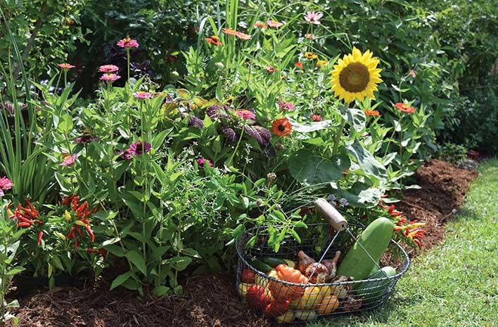 Foodscaping How To Create An Edible Landscape Joe Gardener