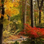 How to Use Fall Leaves in the Garden – and Why You Should