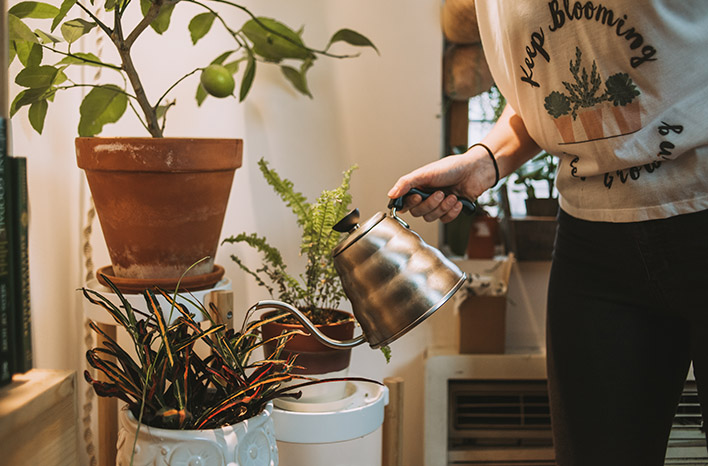 Watering houseplants