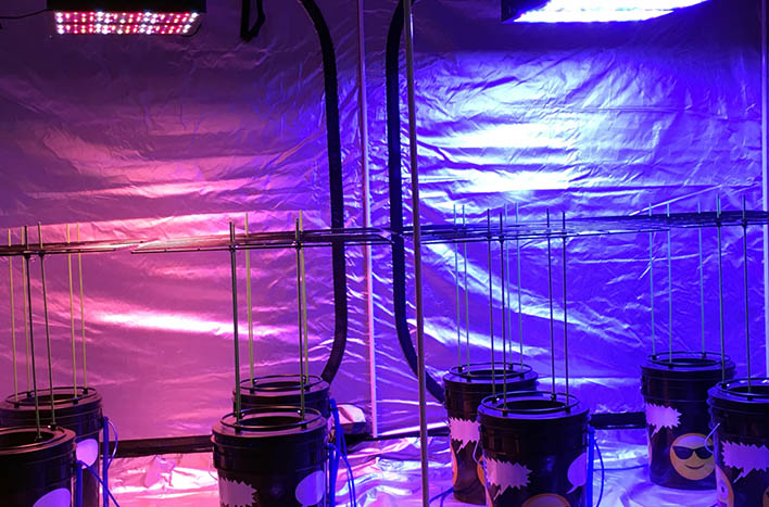 Red and blue grow lights