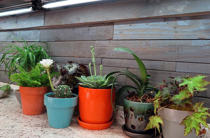 Houseplants under grow lights