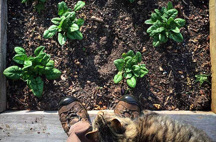 Timeless gardening principles