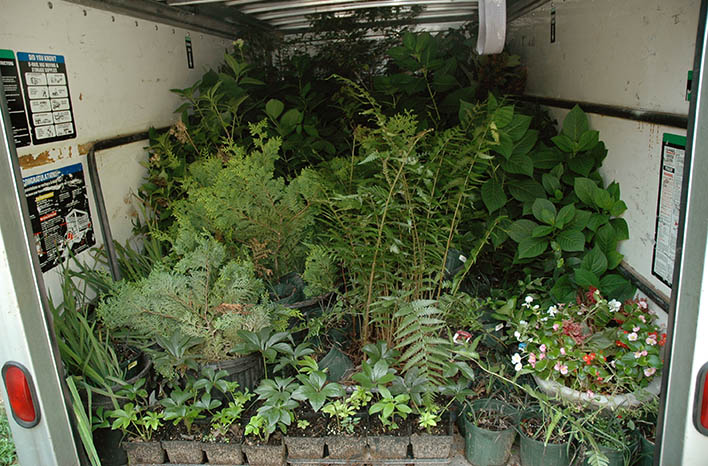 van loaded with containerized plants