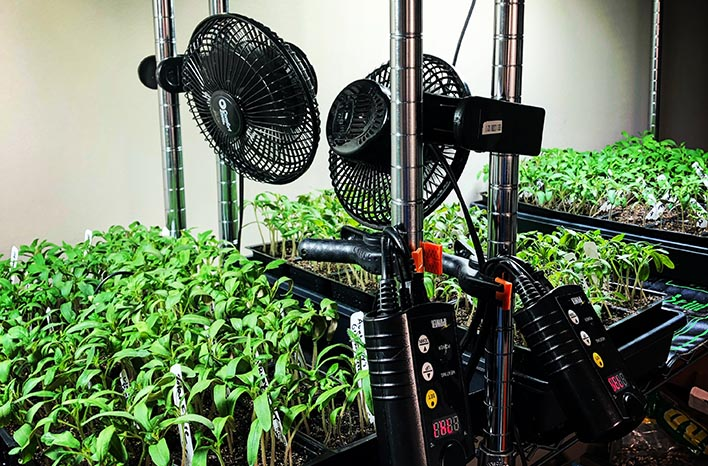 Fans and seedlings